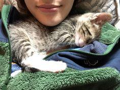 Jake Peralta the sweetest foster kitten around https://ift.tt/2qlxE6C