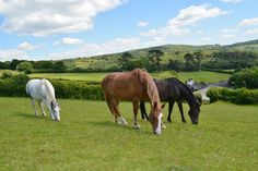 Lowertown Farm Bed and Breakfast, Poundsgate, Devon, Dartmoor National Park, England. Accepts Horses. Bed and Breakfast. #WeAcceptPets. PetFriendly. Holiday. Travel. Walks. Day Out.
