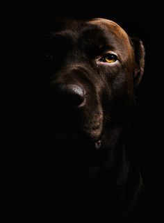 Low Key Photography on Pinterest | Low Key Portraits, High Key ...