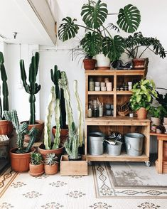 Indoor Garden, Indoor Plants, Plant Companies, Cactus, Room With Plants, Plant Therapy, Meditation Space, Hippie Life, Stay Hydrated