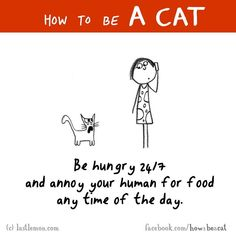 Literally my mum and my cats relationshipXD Crazy Cat Lady, Crazy Cats, How To Cat, Cat Jokes, Gatos Cats, Cat Comics, Like A Cat, Cat People, Cat Life