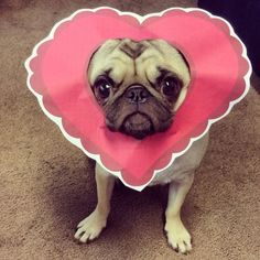 http://europug.eu/ debramariedesigns: Happy valentines day from the valentine pug!...