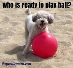 WHO IS READY TO PLAY BALL???