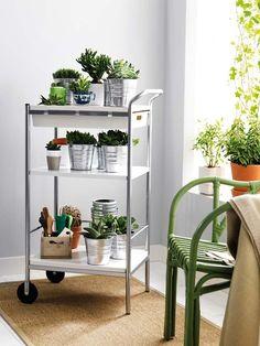 1000 images about plantas y flores on pinterest anti for Caseta jardin ikea