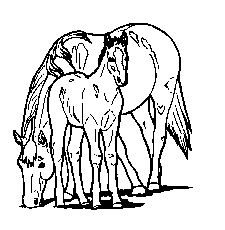 247 best horses images horses horse horse art International 2 Ton Trucks coloring free printable horse coloring pages for kids and lag baomer pages horse printable coloring pages