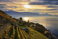 The sunkissed vineyards of Switzerland's Lavaux region, in the day's last light. Yves Marcoux / Design Pics / Perspectives / Getty Images