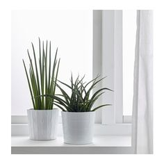 Structural indoor plant in square planters super modern - Plante d interieur ikea ...