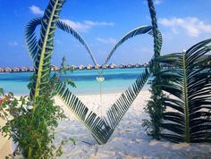 """LUX South Ari Atoll palm heart (not to be confused with a """"heart of palm"""") Outdoor Furniture, Outdoor Decor, Maldives, Confused, Hammock, Palm, Hearts, The Maldives, Hammocks"""