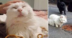 2/19/17 - ADOPT ME! 'Unadoptable' Cat Wouldn't Let Anyone Near Him But His Rescuer Never Gave Up, Now a Year Later...