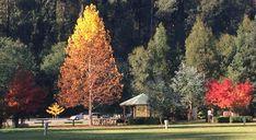 Marysville,victoria, Australia. http://www.worldtraveltribe.com/category/destinations/australia/victoria/