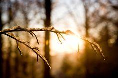"""#WeekendWordsOfWisdom: """"In seed time learn, in harvest teach, in winter enjoy."""" ―William Blake"""