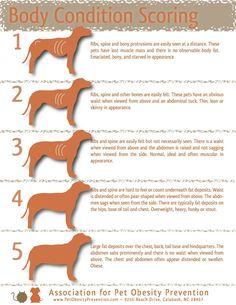 How to tell if your #dog is a healthy weight #pet-health-tip #top10dogsandpuppiesbreeds
