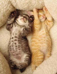Throw your hands up in the air like you just don't care!  #cute #kittens