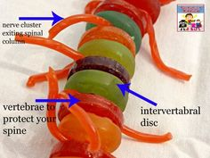 candy spinal column- I would adapt this using buttons or other non edible things.