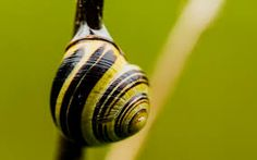 snail wallpaper - Buscar con Google
