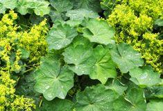 Nutrition for a better life Herb Garden, Vegetable Garden, Health And Nutrition, Health Fitness, Lose Weight, Weight Loss, Atkins Diet, Health Advice, Better Life
