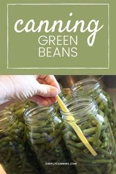 Canning green beans...can you do it without a pressure canner? Learn the answer and how to can green beans safely at #SimplyCanning #CanningGreenBeans #GreenBeans Corn Cob Jelly, Corn On Cob, Stewed Tomatoes, Canning Tomatoes, Canning Vegetables, Fresh Vegetables, Dandelion Jelly, Pear Butter, Can Green Beans