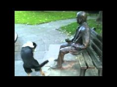 Dog trying to get a statue to play fetch. Makes me want to throw the stick for him lol poor dog Animals And Pets, Funny Animals, Cute Animals, Animal Funnies, I Love Dogs, Puppy Love, Poor Dog, All Nature, Funny Cute