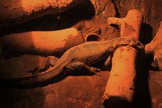 34 Batu Caves, Antelope Canyon, Nature, Painting, Art, Art Background, Naturaleza, Painting Art, Kunst