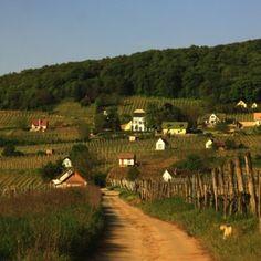 Villány: bor és kerékpártúra - Bringa, Messzi tájak Európa biciklitúra | Utazom.com utazási iroda Bor, Short Trip, Budapest, Hungary, Trips, Country Roads, Viajes, Travel, Traveling