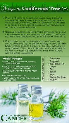 The oils released from tree needles is invigorating for both body and soul. It seems to elevate the mind and spirit and helps to relieve our inner torments. But, Can a Walk in the Woods Kill Cancer Cells? Find the answer and 3 Ways To Use Coniferous Essential Oils when clicking on the image above..