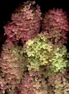 Hydrangea bouquet by horticultural art on Flickr