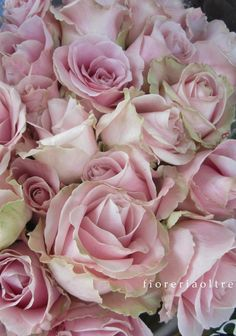Fioreria Oltre/ Pale pink roses