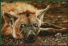 .lazy hyena