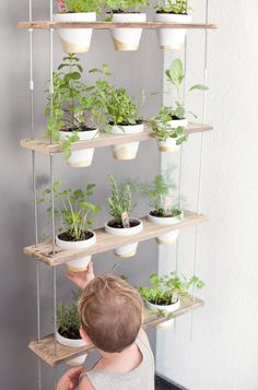 This DIY Herb Wall Is the Most Stylish Way to Add Green to Your Kitchen | Kitchn