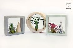 Available online: www. Air Plants, Greenery, Concrete, Shapes, Gift Ideas, Decoration, Gifts, Home Decor, Decor