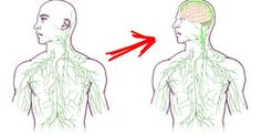 Quando se achava que não havia mais nada para se descobrir sobre o corpo humano, descobriram isso!