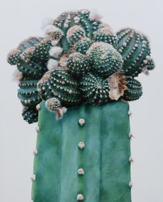 KWANG-HO LEE, Cactus No. 97