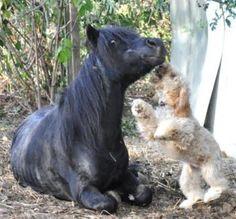 Sauvons SOS ANIMAL TENDRESSE, 115 petits amis à sauver avant le 5 juin 2016; dette véto à honorer