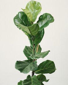 Biofilia (@biofiliastore) • Fotos y videos de Instagram Roomspiration, Plant Leaves, Instagram, Plants, Plant, Planets