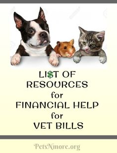 Pets N More: List of Resources for Financial Help for Veterinary Bills