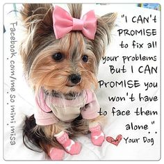 Your Yorkie loves you very much!