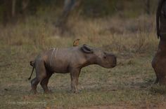 Newborn Baby Rhino Enjoys Her Impossibly Cute First Days On Earth