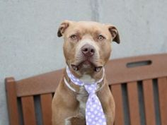 Adopt Lito..he needs a forever family..he is set to be euthanized 4/13/17. TO BE DESTROYED 04/13/17: ****CAN BE PUBLICLY ADOPTED**** NYC ACC.