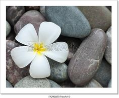 """""""Spa and wellness - White frangipani and therapy stones."""" - Art Print from FreeArt.com"""