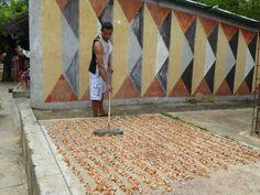 secando cacao  en Chacaracual.