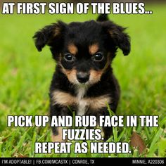 How to cure the blues... #puppy #love