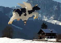 So this is how the cow jumped over the moon? The Cow hot air balloon takes off in the skiing resort of Chateau d'Oex, in the Swiss Alps.