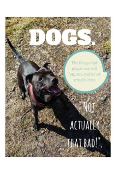 Thinking about getting a dog? For new or potential doggy parents looking to take the leap!