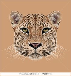 Illustrative Portrait of Leopard Cute face of African Leopard - Shutterstock