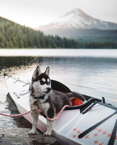 All you really need is a pup and some wild views. Trillium Lake, Mt. Hood.   UP KNÖRTH by @taylersteven
