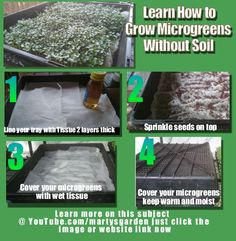 How to Grow Microgreens without Soil with Microgreens farmer Marty Ware from Marty's Garden. Click the website link or graphic to learn more on this subject now!