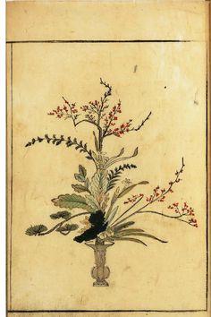 Botanical - Floral Design - Ikebana vol 1 arrangement Botanical Flowers, Botanical Prints, Flowers Garden, Ikebana Flower Arrangement, Flower Arrangements, Plant Tattoo, Japanese Drawings, Vintage Drawing, Fauna