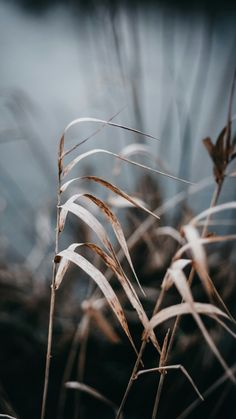 inspired by nature November Wallpaper, Fall Wallpaper, Nature Wallpaper, Wallpaper Backgrounds, Iphone Wallpaper, Iphone Backgrounds, Simple Wallpapers, Aesthetic Pictures, Beautiful Landscapes