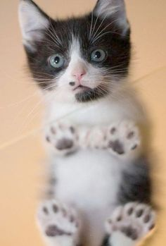 Time for a super cute kitten..paws and toes dot near my nose!!!