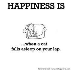 Happiness #117: Happiness is when a cat falls asleep on your lap.